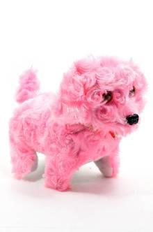 Собака П5814